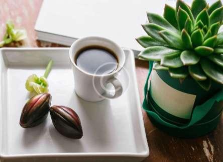 12 green-enlivened interior design ideas